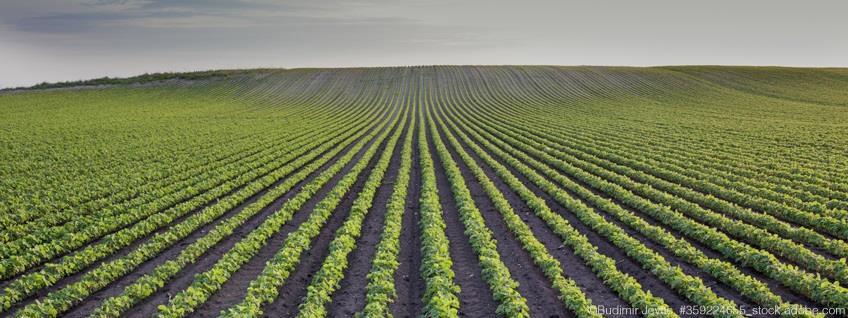 Import: Kontrollen bei Pflanzen zum Anpflanzen nach ihrer Einfuhr